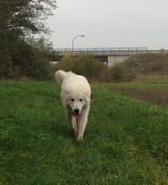 Bewegung mit dem Hund an der frischen Luft (c) Foto: DK/familienfreund.de