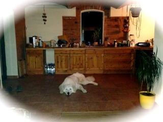 Hund chillt in der Küche (c) Foto: DK/familienfreund.de