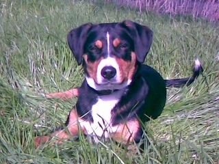 Gepflegtes Hundefell ist ein Zeichen von Gesundheit (c) Foto: DK/familienfreund.de