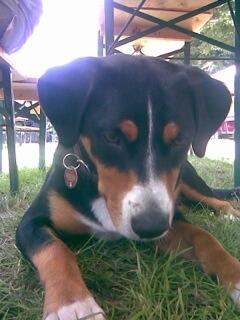 Hund wartet auf unter dem Tisch auf kleines Häppchen (c) Foto: DK/familienfreund.de