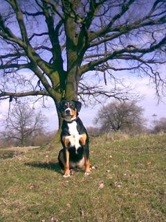 Als Begleiter ist ein Hund bestens geeignet (c) Foto: DK/familienfreund.de