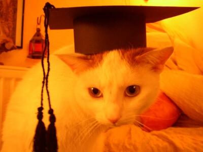 Haustier | Katze (c) B. Schmincke / pixelio.de