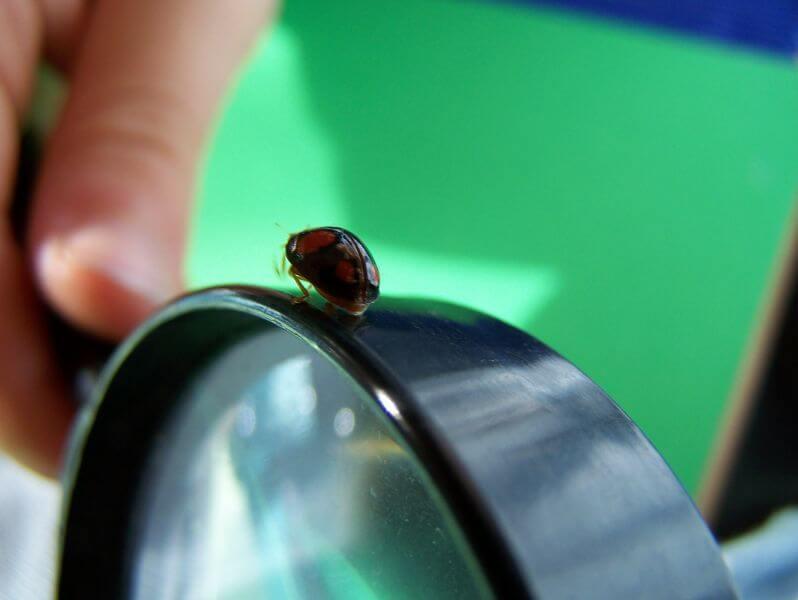 Lupe (c) Pixelio.de / Moritz Mehrlein