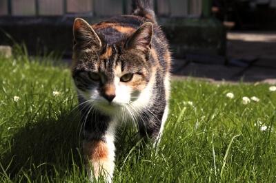 Haustier | Kätzchen (c) nicole2 / pixelio.de