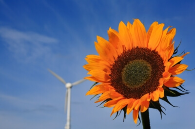 Energie | Sonnenblume mit Windrad (c) Rainer Sturm / pixelio.de