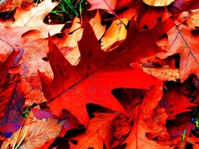 Natur | Herbstimpressionen (c) knipseline / pixelio.de