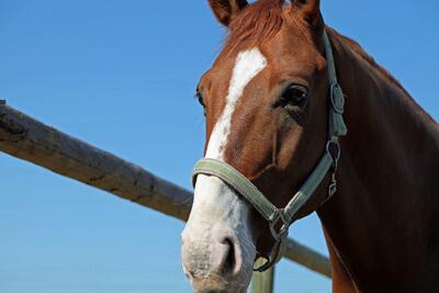 Tier | Pferd (c) Andrea Damm / pixelio.de