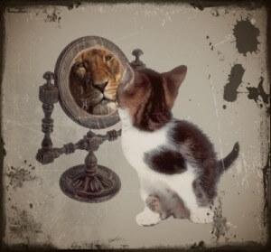 Haustier | Katze vor dem Spiegel (c) Ernst Rose / pixelio.de