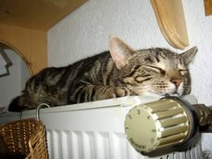 Tier | Katze auf der Heizung (c) Koch/pixelio.de