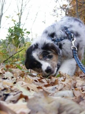 Tier | Mit Hund im Urlaub (c) Mareike Radomski / pixelio.de