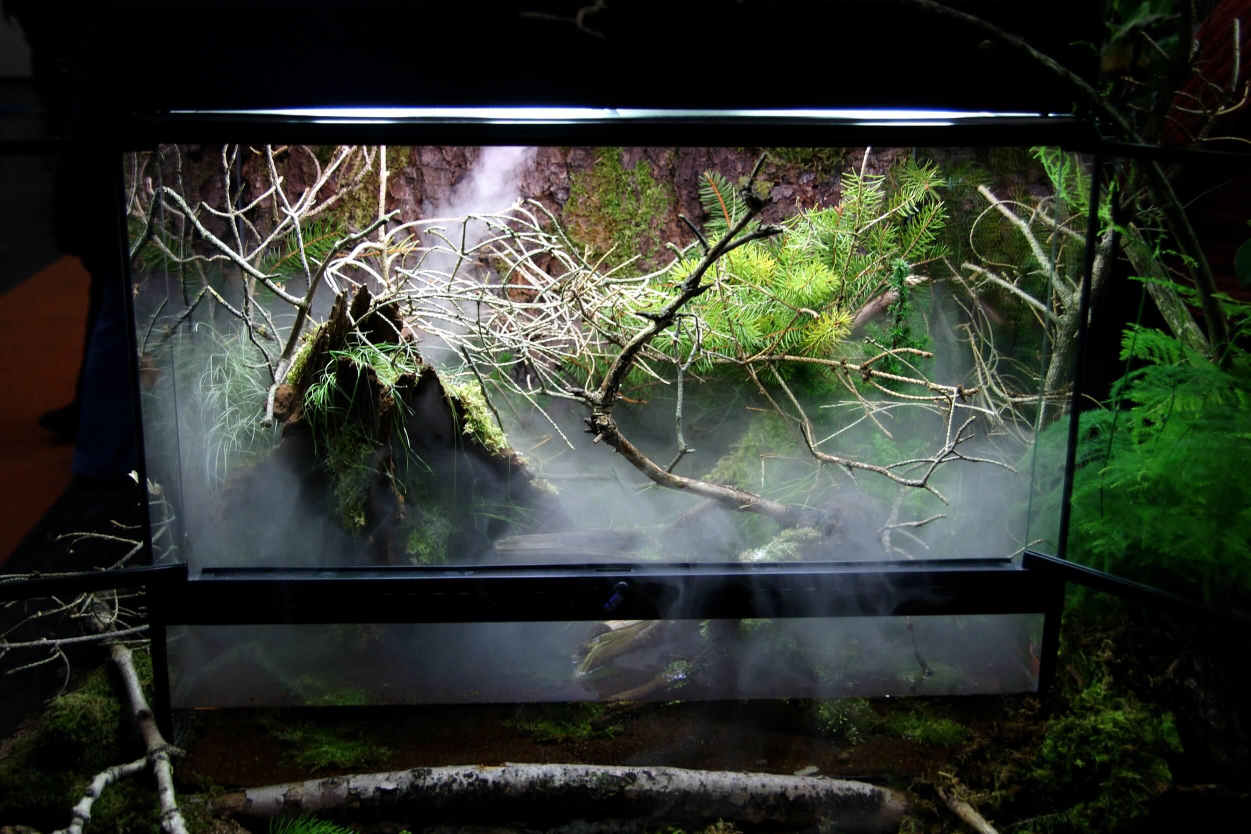 Ein optimal ausgestattetes Terrarium schafft Atmosphäre. (c) Foto: FLH / leben-mit-heimtieren.de