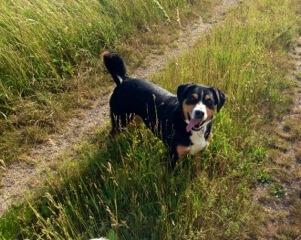 Hund gesund und fit (c) Foto: DK/familienfreund.de