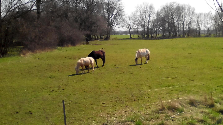 Pferde Herde (c) familienfreund.de