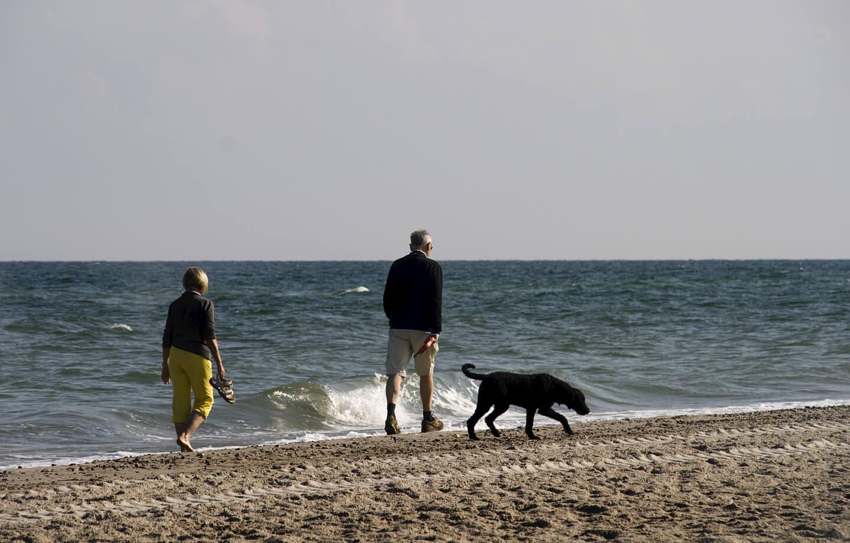Urlaub Strand Hund (c) Lutz Kadner / pixelio.de