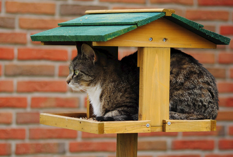 Katze Haustier Betreuung (c) Radka Schöne / pixelio.de