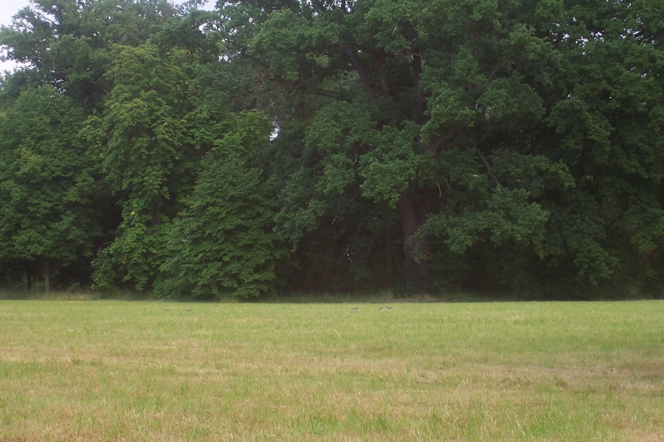 Wald Wiese Lichtung (c) familienfreund.de