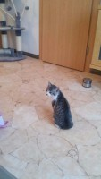 Kätzchen zu Hause (c) familienfreund.de