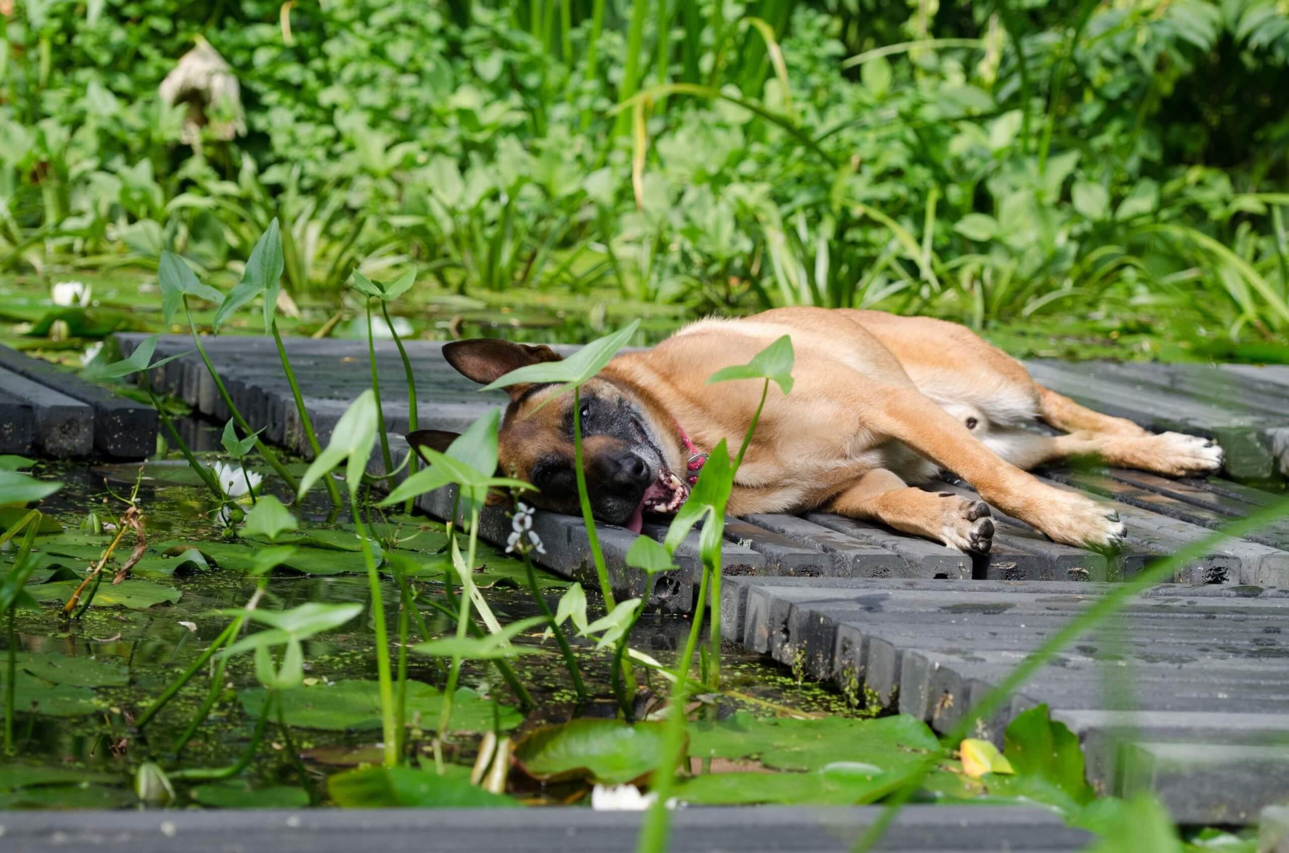 Pool Hund (c) 825545 pixabay.de