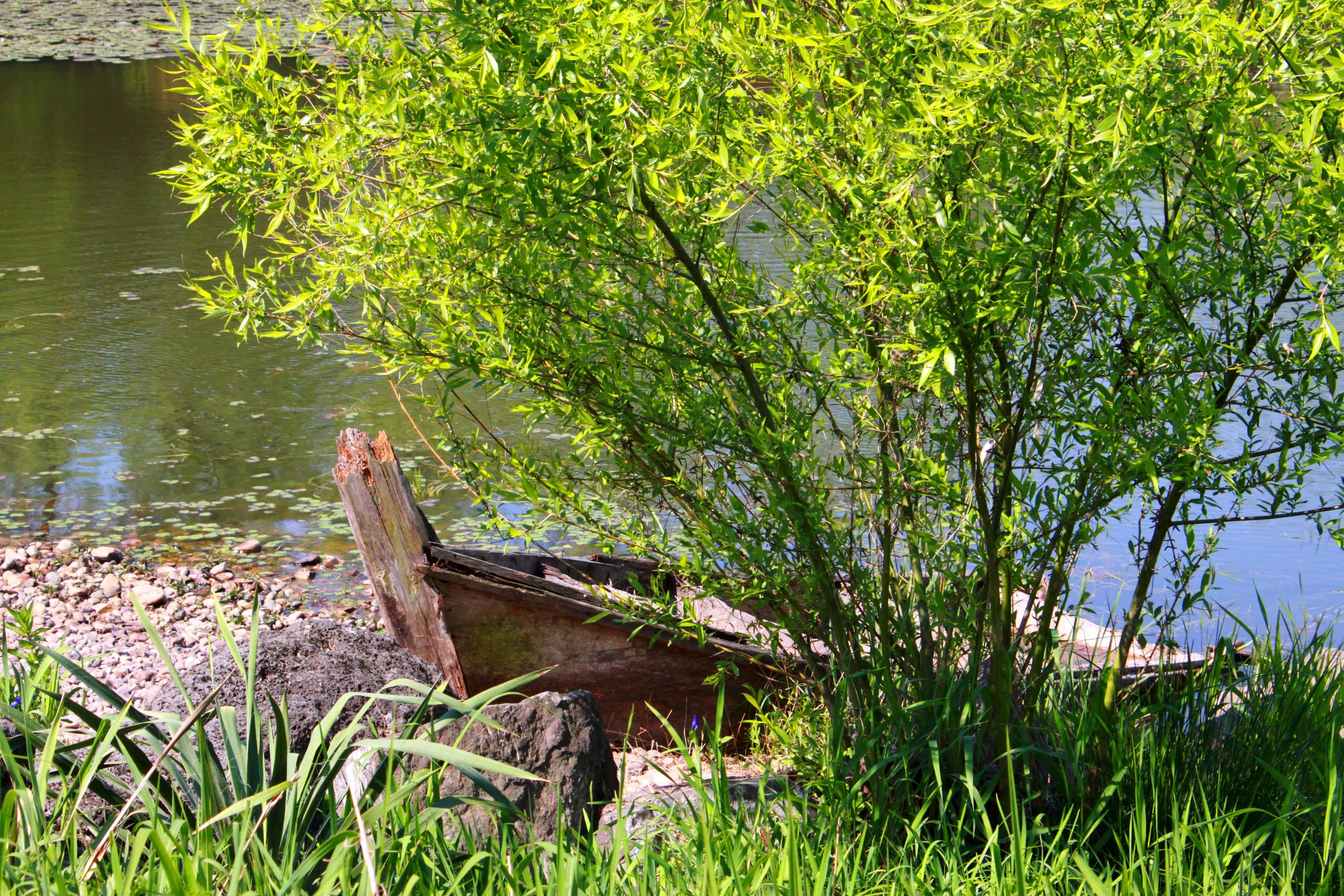 Wasser Strauch Boot (c) Jungyeon pixabay.de